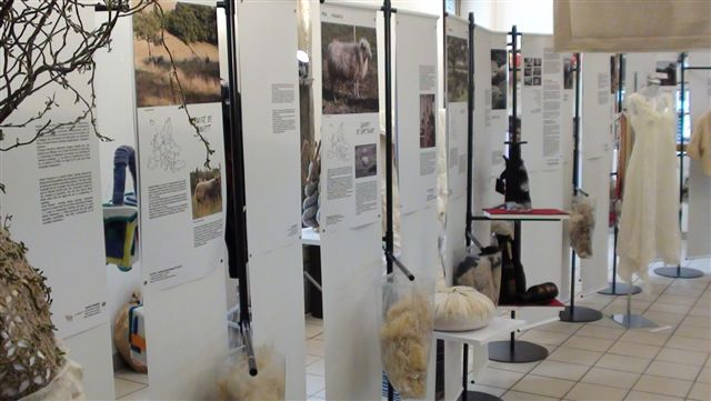 european wool display rambouillet